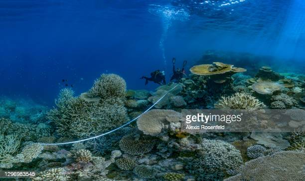 Divers from the Mayotte Marine Natural Park carry out a survey on the reef, called REEFCHECK, on November 27 Mayotte, Comoros archipelago, Indian...
