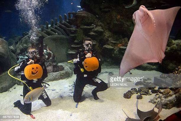 Divers hold their pumpkins after carving them in a fish tank during a photo call to mark Halloween season at the London Aquarium in central London on...