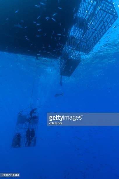 divers in shark cage - cdascher stock pictures, royalty-free photos & images