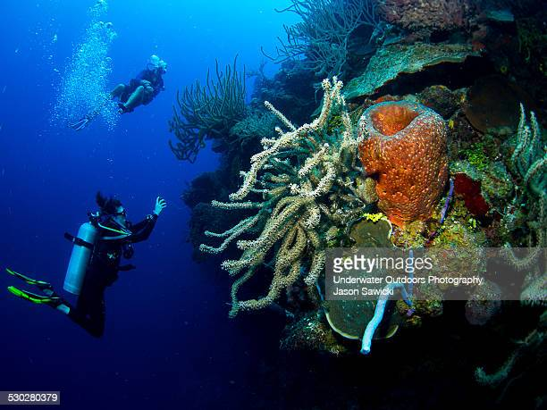 divers on west caicos wall - turks and caicos islands stock pictures, royalty-free photos & images