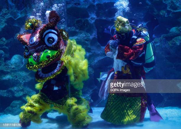 Divers perform the lion dance at the Aquaria KLCC during the Lunar New Year celebrations. Chinese around the world will be celebrating the Chinese...