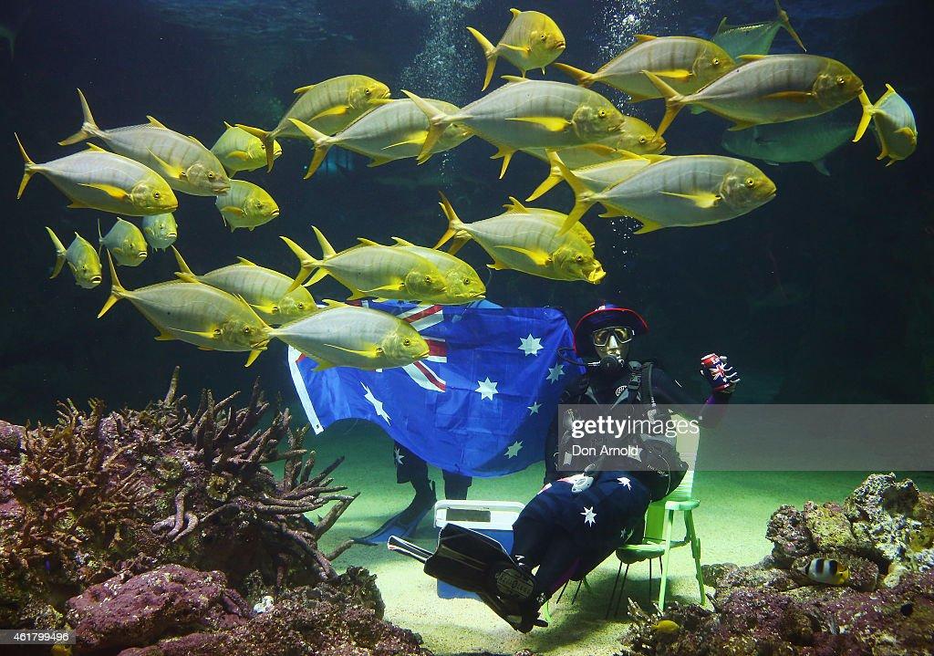 SEA LIFE Sydney Aquarium Celebrates Australia Day : News Photo