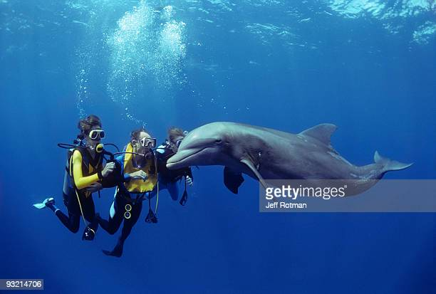 Divers swimming with dolphin.