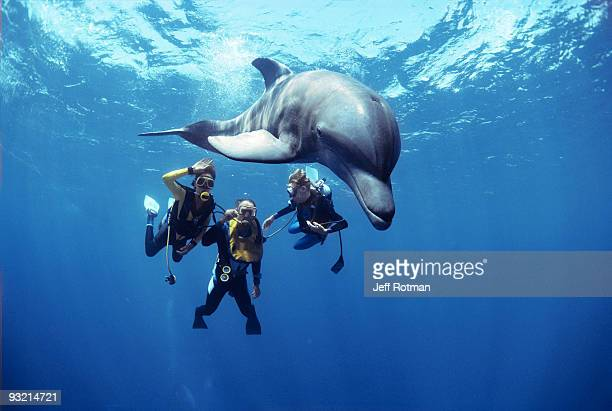 divers swimming with dolphin. - sea swimming stock photos and pictures