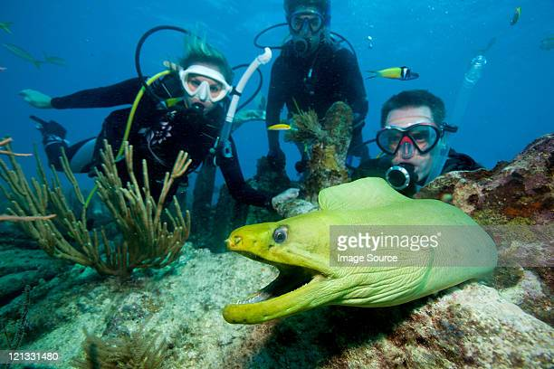 Divers with moray eel