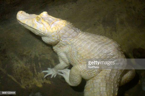 Diverse animals such as fish reptiles alligators among others are seen in the Aquarium of São Paulo in the South Zone on the afternoon of this Monday...