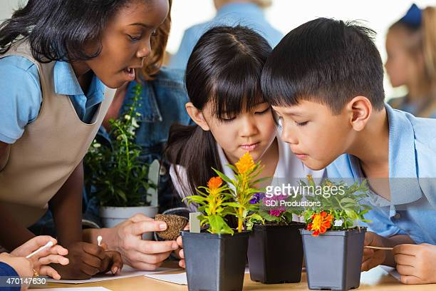 Diverse elementary school students studying plants in science class