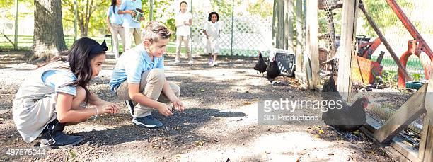 Vielfältige elementaren Schülern Hühner füttert während farm field trip