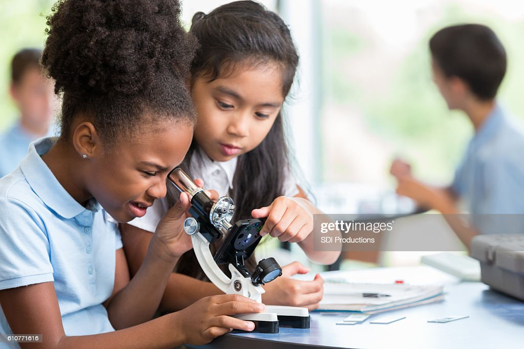 Diverse schoolgirls work together on science project : Stock Photo