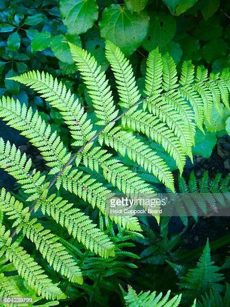 divine nature - heidi coppock beard stock pictures, royalty-free photos & images