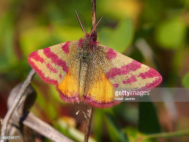 divine nature - geometridae stock photos and pictures