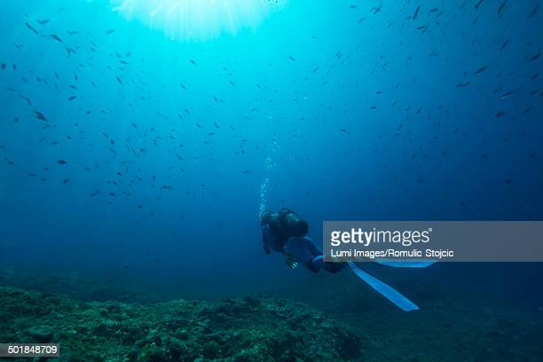 diving, adriatic sea, croatia, europe - one man only stock pictures, royalty-free photos & images