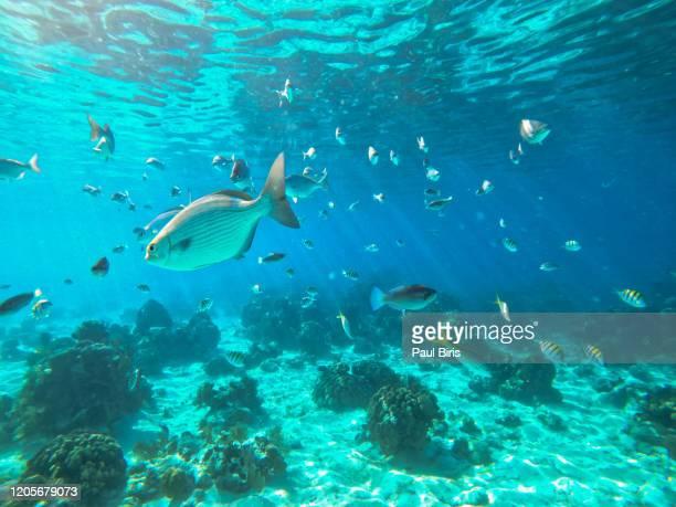 diving and snorkeling in the bahia de cochinos, bay of pigs, playa larga, cuba - 浅い ストックフォトと画像