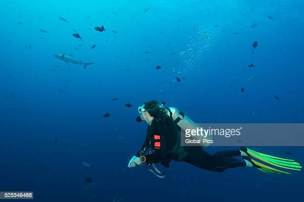 Diving Blue Corner, Palau