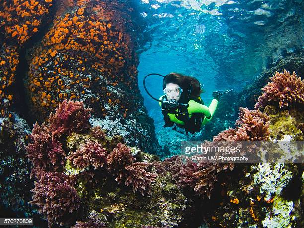diving in spain - sporttauchen stock-fotos und bilder