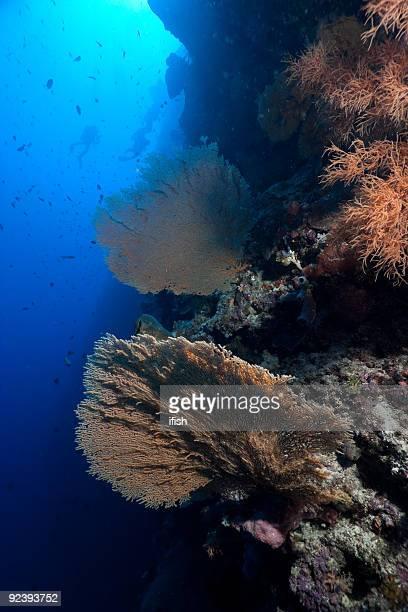 Diving in the Wonderland of tropical reefs at Bunaken Island