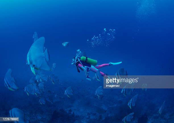 diving - undersea stock pictures, royalty-free photos & images