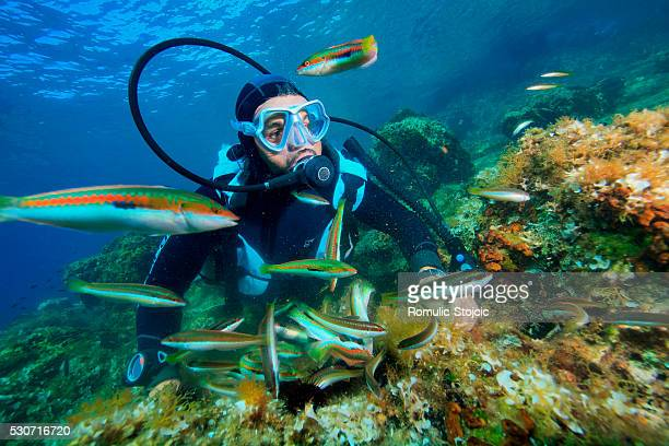 Diving, School of Fish, Adriatic Sea, Croatia, Europe