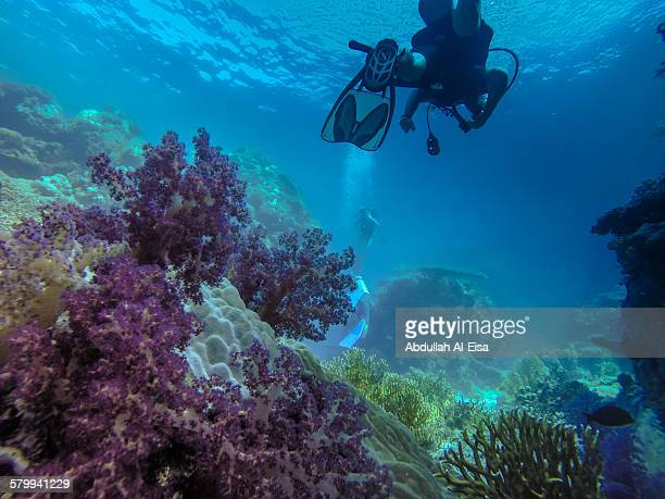 diving the redsea - red sea stock pictures, royalty-free photos & images