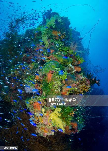 diving the yamagiri maru wreck - lagon chuuk photos et images de collection