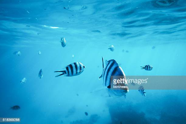 diving with fishes - zanzibar stock photos and pictures