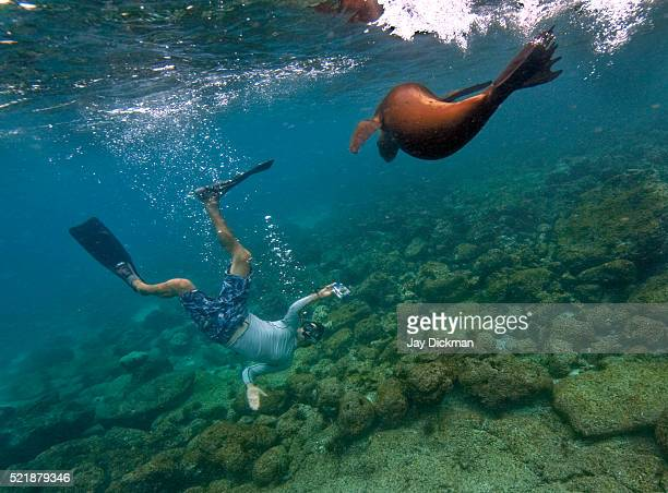 Diving with sea lions in the Galapagos Islands