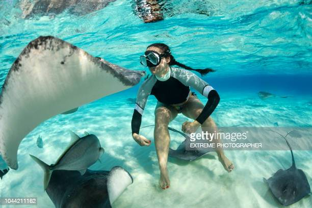 diving with stingray fish - stingray stock photos and pictures