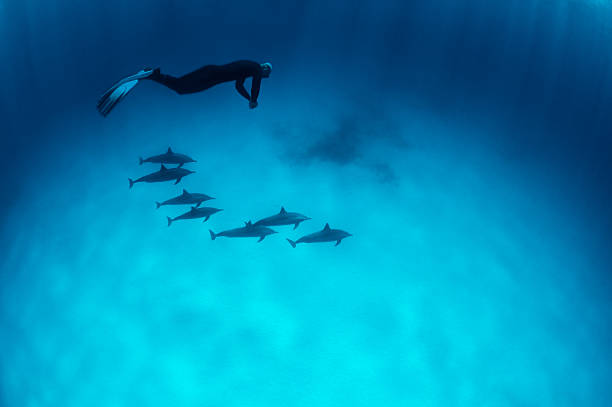 Diving With The Dolphins