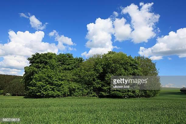 DLichtenau Buerener Land Paderborn Plateau Eggegebirge Teutoburg Forest / Egge Hills Nature Park East Westphalia Westphalian Lowland North...