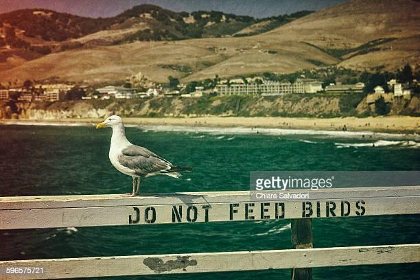 do not feed birds - ピスモビーチ ストックフォトと画像