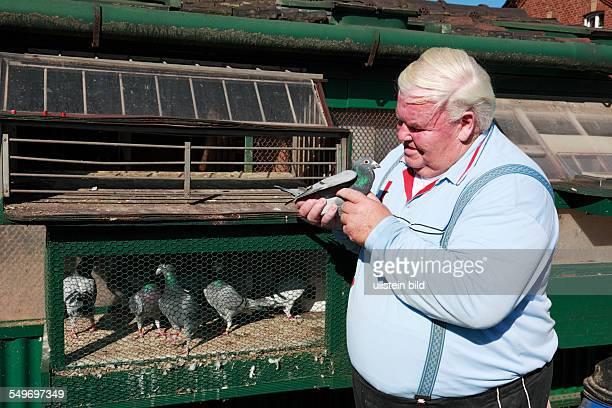 Oberhausen-Osterfeld, Eisenheim settlement, workers settlement, route of industrial heritage, pigeon breeding, breeder Manfred Heldt at his pigeon...