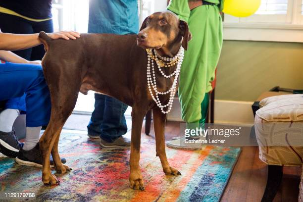 Doberman Pinscher wearing beads surrounded by people in costume