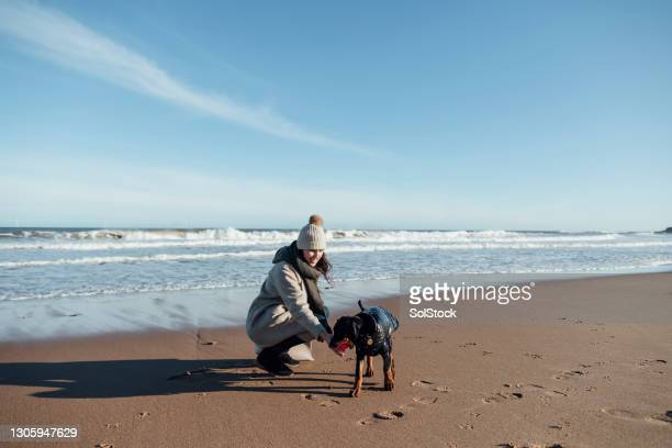 doberman puppy at the beach - pet toy stock pictures, royalty-free photos & images