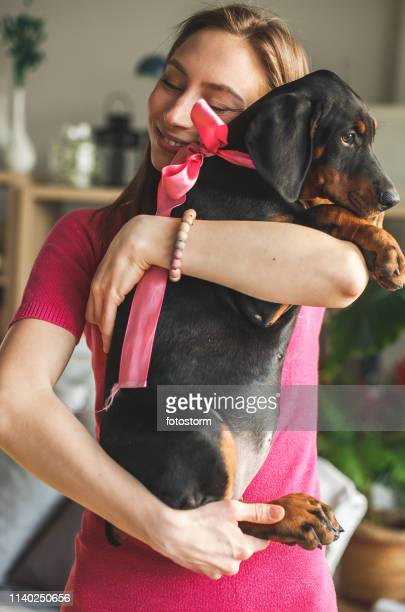 doberman puppy getting cuddles from her owner - dog knotted in woman stock pictures, royalty-free photos & images
