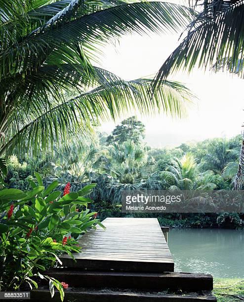 Dock in river , Jamaica