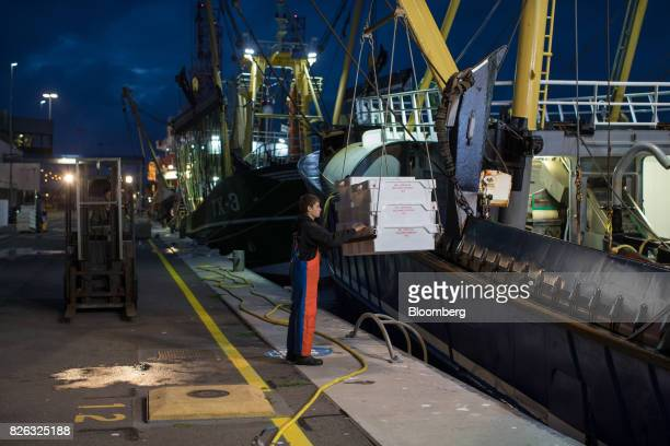 A dock worker maneuvers crates of fish on the dockside as a fishing trawler lowers its catch before sunrise at the port of Den Helder Netherlands on...