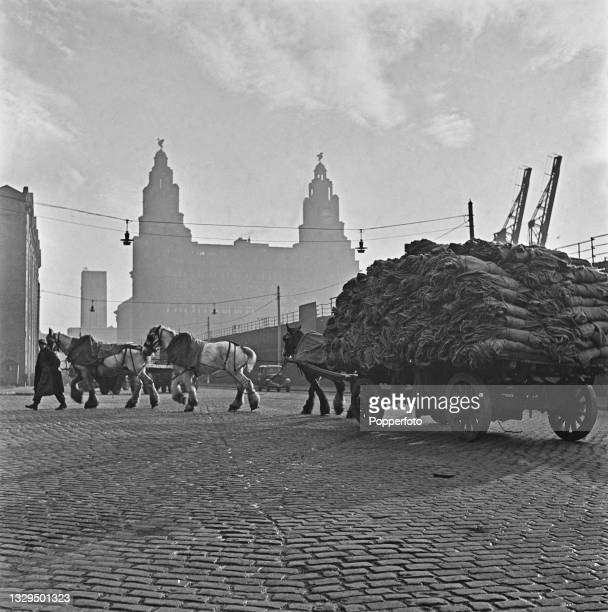 Dock workers lead a team of dray horses pulling a fully loaded cart along a road leading to a wharf at the docks in Liverpool, England during World...