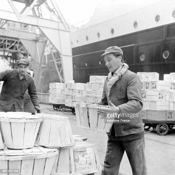 Docker déchargeant des cageots sur le port de Marseille France en 1955