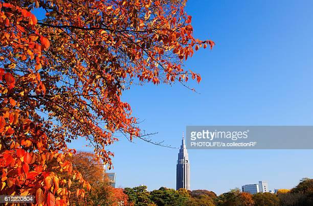 NTT DoCoMo Yoyogi Tower at Autumn
