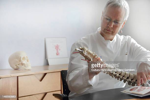 Doctor examining spine model in office