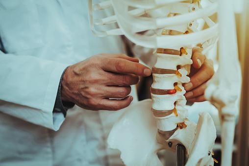 Doctor Holding and Showing Vertebrae on Skeleton 1125846531