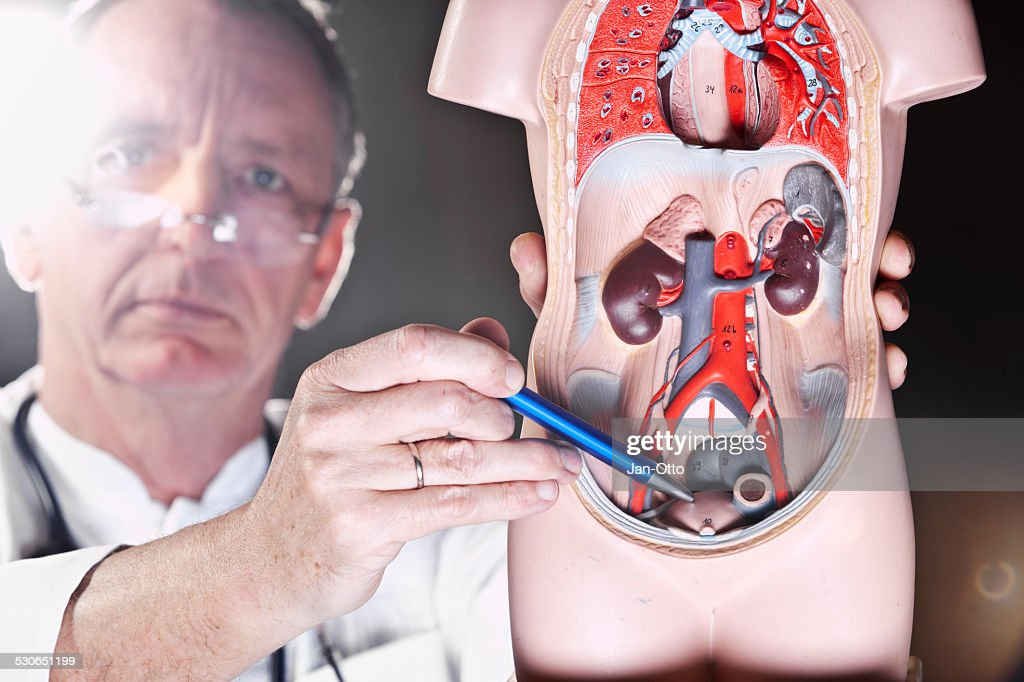 Doctor pointing at bladder : Stock Photo