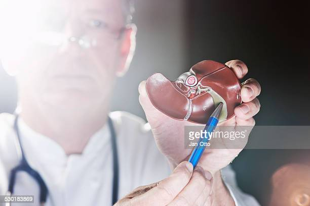 doctor pointing at gall bladder - human liver stock photos and pictures