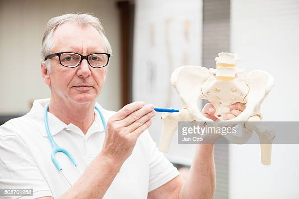 Doctor pointing at hip joint