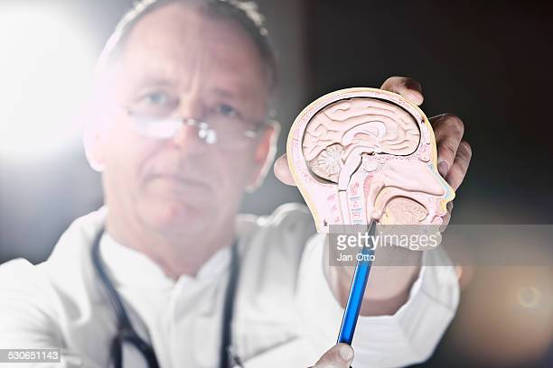 doctor pointing at larynx - diencephalon stock photos and pictures