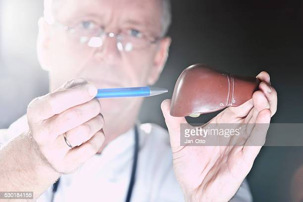 doctor pointing at liver - human liver stock photos and pictures