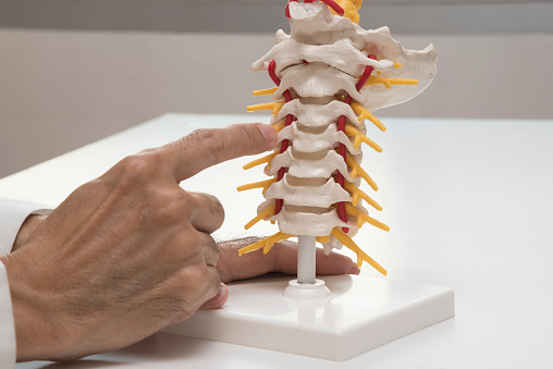 Doctor teaching the cervical spine anatomy 911348636