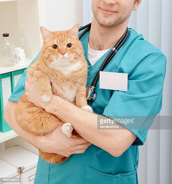 Arzt Tierarzt untersuchen schöne Erwachsene Katze