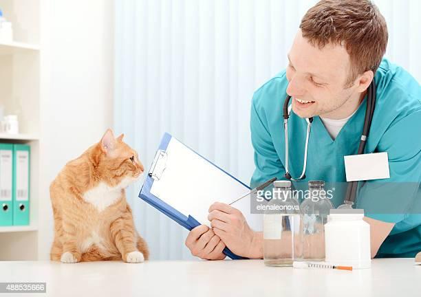 Médecin vétérinaire examiner superbe chat adulte