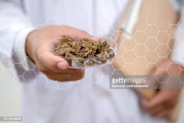 doctor woman scientist making herbal medicine in lab with herb leaves vitamin supplements mineral alternative treatment research.cannabis - cannabis oil stock photos and pictures